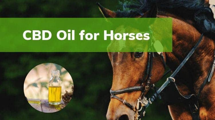 CBD Oil for Horses – Ensuring Safety and Product Quality
